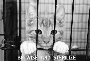 BE WISE AND STERILIZE by SaphoPhotographics