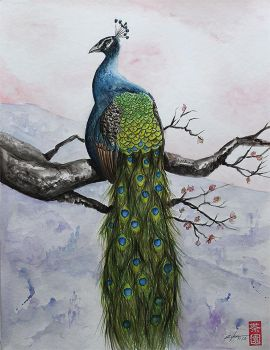 peacock by rchaem