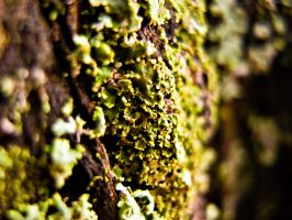 Moss by sine-out