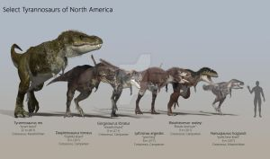 Select North American Tyrannosaurs by PaleoGuy