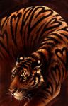 Seven of Hearts: bengal tiger by kenket