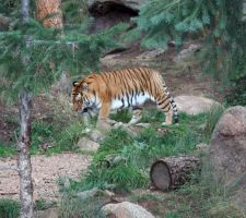 Cheyenne Mtn Zoo 41 by Falln-Stock