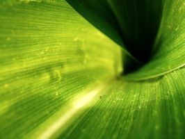 leaf. by Casiula