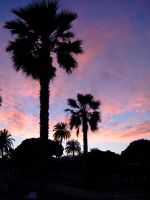 palmtrees at sundown by Videtis
