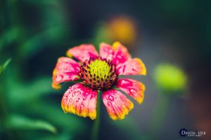 Living color by dratwister