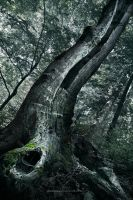 The Serpent Tree by nonsensible