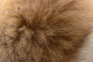 Fur texture 1 by Panopticon-Stock