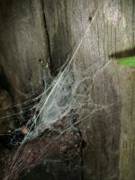 Spider Web by Rubyfire14-Stock