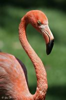 pink flamingo by Yair-Leibovich