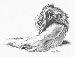 Lion pencil drawing by darrenOhhh