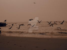 Birds on sea by thomas4863