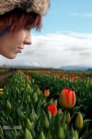 Welcoming the Tulips by boydphotography