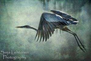 The Great Blue Heron by CeeThruMyEyes