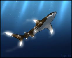 Oceanic white tips by zavraan