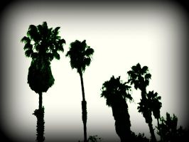 Palm Trees California by scream619