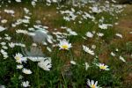 Bubbles n' Daisies by BPinzonPhotography