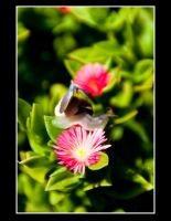 Flutterby by tspargo-photography