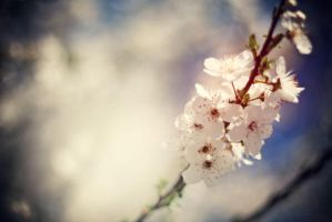 flowers of spring by elizarosca