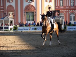 Vibrant Light Dressage Riding Unknown Gait Phase by LuDa-Stock
