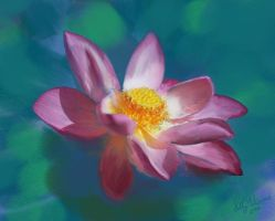 The Lotus Flower by Nimily