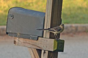 Hired to protect my mail 6-4-14 by Tailgun2009
