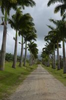 Entry of plantation of Martinique by A1Z2E3R