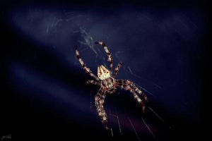 Spider by TonsofPhotos