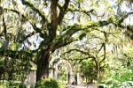 Wormsloe Plantation by JNS0316