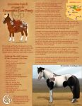 Coconino Cow Pony - Breedsheet by daggerstale