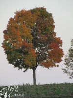 Colourful Tree by The--Silver