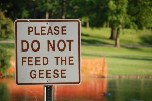 Please Do Not Feed The Geese by ed335dot