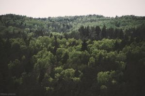 The Woods Of Gauja Valley by LindaMarieAnson