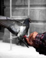 Pigeon Fancier by ninazdesign