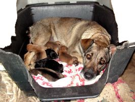 Roxy and her puppies by Nevuela