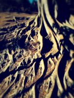 Roots by KaleleAloha