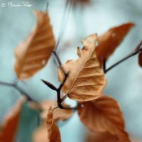 Golden Leaves. by micky3846
