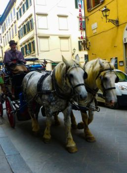 Horse Carriage by Alphasnivylove