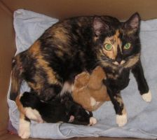 Mama cat still needs a Home! by LilleahWest
