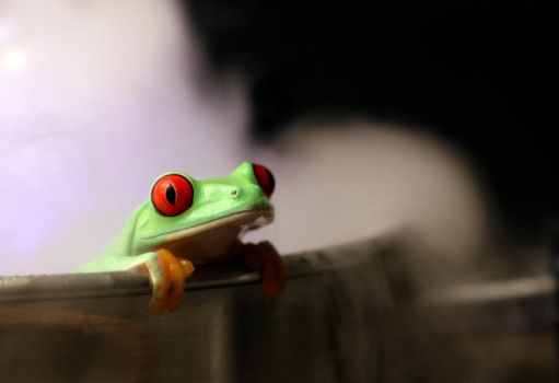 How to boil a frog V1 by AngiWallace