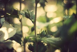 Flowers grow out of dark moments. by BlueColoursOfNature
