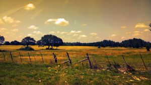 Summer In The Country by TheGerm84