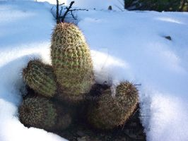 Cactus with Snow 2 by IcejCat