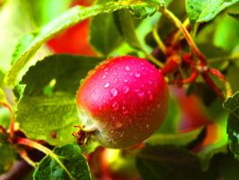 Wet Apple 2 by Chriisii