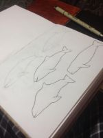 Porpoise Study by thelonefefe