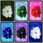 Colourful flowers 111301 by meriwani