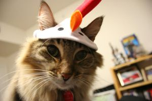 Chicken Cat 2010 FTW by turnerstokens