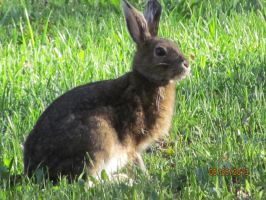 Think Fast, Jack Rabbit by MegBeth