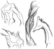 Male Anatomy Study by Tyshea