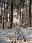 Winter Forest Background 2 by Kuoma-stock