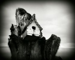 Bird House by PascalsPhotography